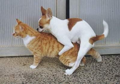 Sakoma, ''...kaip šuo su kate...''